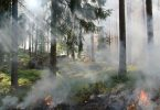 forest fires in lower mainland health problems